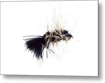 Wooly Bugger Metal Print by Lawrence Burry