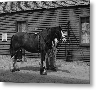 Work Horse Metal Print by Serene Maisey