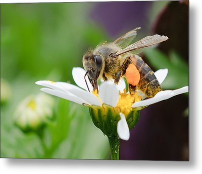 Working Bee Metal Print by Ivelin Donchev