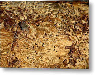 Metal Print featuring the photograph Worm Wood - 1 by Kenny Glotfelty