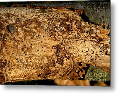 Metal Print featuring the photograph Worm Wood - 2 by Kenny Glotfelty