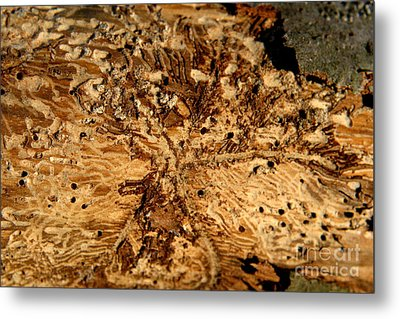 Metal Print featuring the photograph Worm Wood - 3 by Kenny Glotfelty