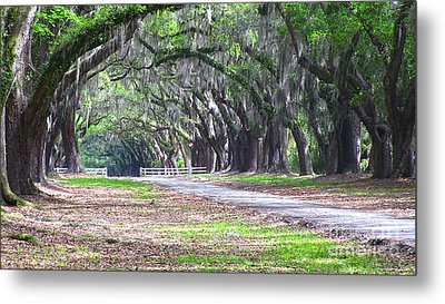 Wormsloe Drive 2 Metal Print by D Wallace