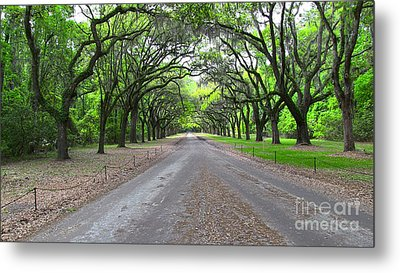 Wormsloe Drive Metal Print by D Wallace