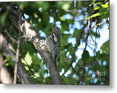 Worn Out Woodpecker Metal Print
