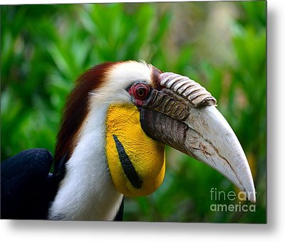 Metal Print featuring the photograph Wreathed Hornbill by Lisa L Silva