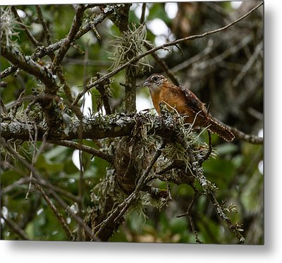 Metal Print featuring the photograph Wren by John Johnson
