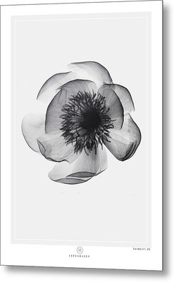 X-ray Flower Metal Print