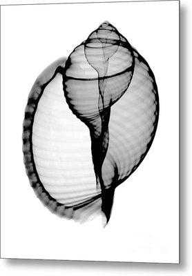 X-ray Of Scotch Bonnet Metal Print by Bert Myers