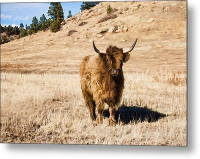 Yak Attack Metal Print by Dan Sabin