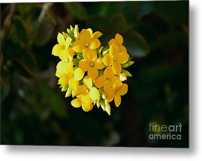 Metal Print featuring the photograph Yellow Allegria  by Ramona Matei