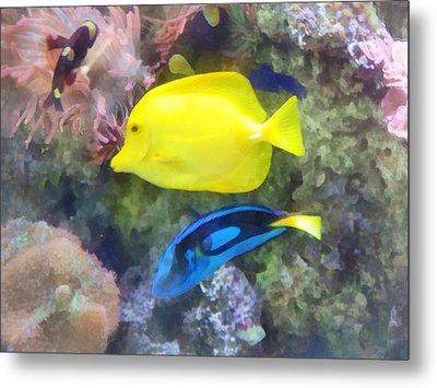 Yellow And Blue Tang Fish Metal Print by Susan Savad