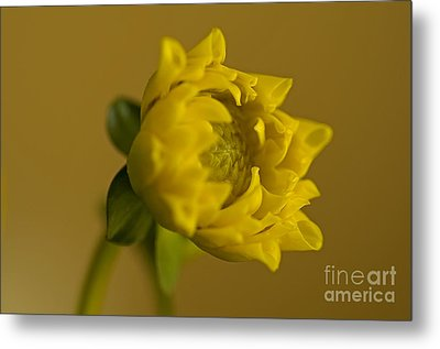 Yellow And Green Metal Print by Nick  Boren