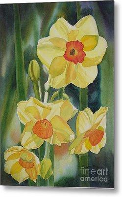 Yellow And Orange Narcissus Metal Print by Sharon Freeman