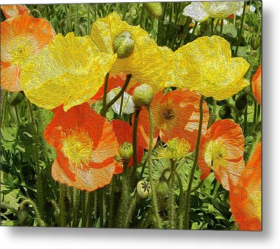 Yellow And Orange Poppies Metal Print by Dee Meyer