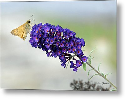 Metal Print featuring the photograph Yellow And Purple by Kenny Francis