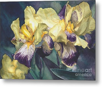 Yellow And Purple Streaked Irises Metal Print by Greta Corens