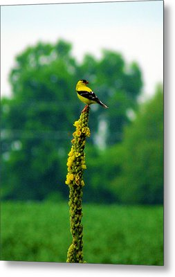 Yellow Metal Print by Andrea Dale