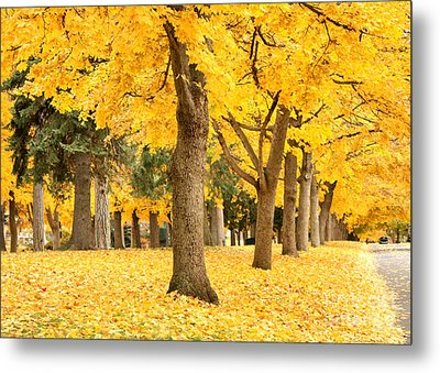 Yellow Autumn Wonderland Metal Print by Carol Groenen