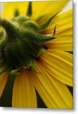 Yellow Backside Metal Print by Alexandra  Rampolla