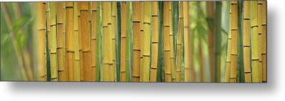 Yellow Bamboo Scape Metal Print by Cora Niele