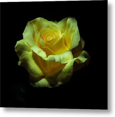 Yellow Beauty Metal Print by Cecil Fuselier