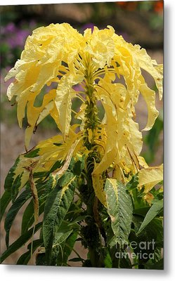 Yellow Beauty Metal Print by Theresa Willingham