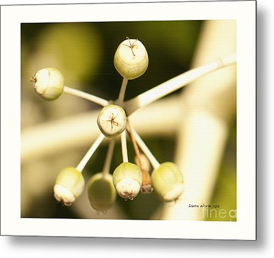 Yellow Berries Metal Print by Artist and Photographer Laura Wrede