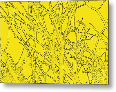 Yellow Branches Metal Print by Carol Lynch