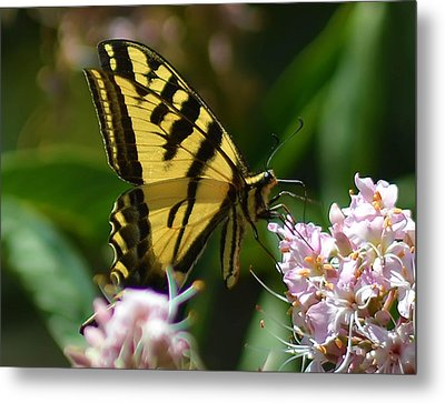Yellow Butterfly Metal Print by Camille Lopez