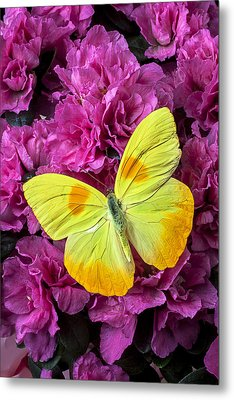 Yellow Butterfly On Pink Azalea Metal Print