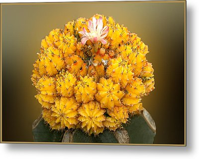 Metal Print featuring the photograph Yellow Cactus by Geraldine Alexander