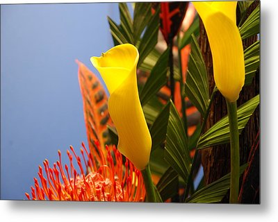 Metal Print featuring the photograph Yellow Calla Lilies by Jennifer Ancker