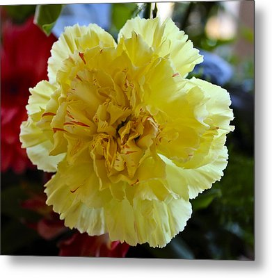 Yellow Carnation Delight Metal Print by Kurt Van Wagner