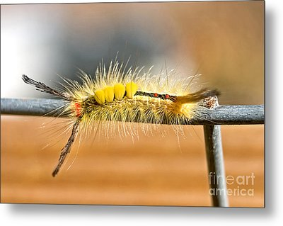 Yellow Caterpillar Metal Print