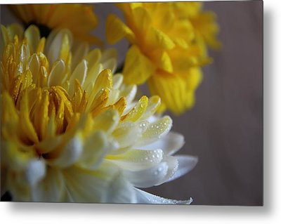 Yellow Chrysanthemum Metal Print by Lynn Jordan