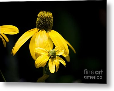 Yellow Coneflower Metal Print