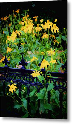 Yellow Coneflowers Echinacea Wrought Iron Gate Metal Print by Rich Franco