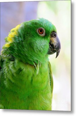 Yellow Crowned Amazon Parrot No 1 Metal Print by Mary Deal