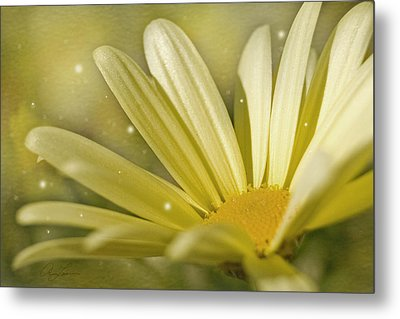 Yellow Daisy Metal Print by Ann Lauwers