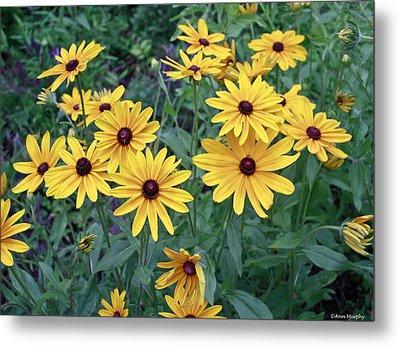 Yellow Daisy Flowers #3 Metal Print