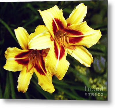 Metal Print featuring the photograph Yellow Daylilies  by Tom Brickhouse
