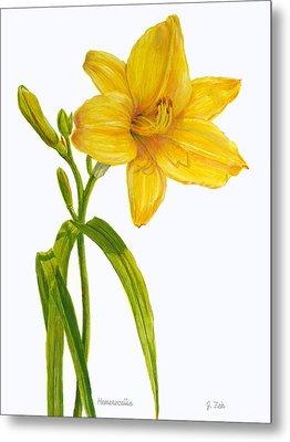 Yellow Daylily - Hemerocallis Metal Print