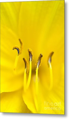 Yellow Metal Print by Dee Cresswell