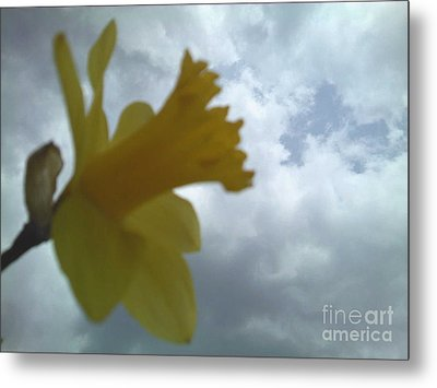 Yellow Delight Metal Print by Thommy McCorkle
