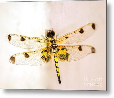Yellow Dragonfly Pantala Flavescens Metal Print by Iris Richardson