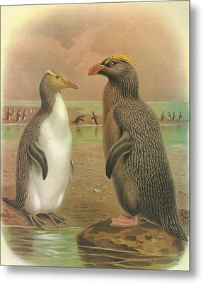 Yellow Eyed Penguin And Snares Crested Penguin  Metal Print by Anton Oreshkin