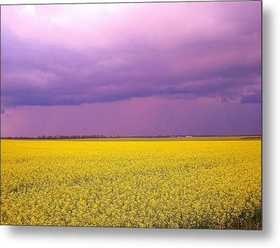 Yellow Field Purple Sky Metal Print by Cathy Long