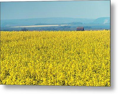 Yellow Field Metal Print by Svetlana Sewell