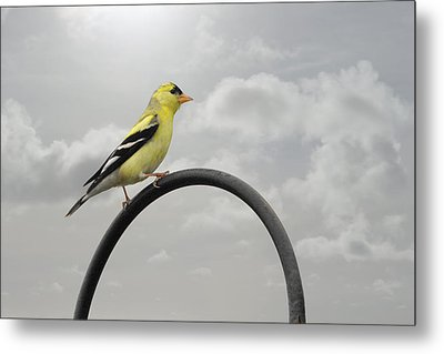 Yellow Finch A Bright Spot Of Color Metal Print
